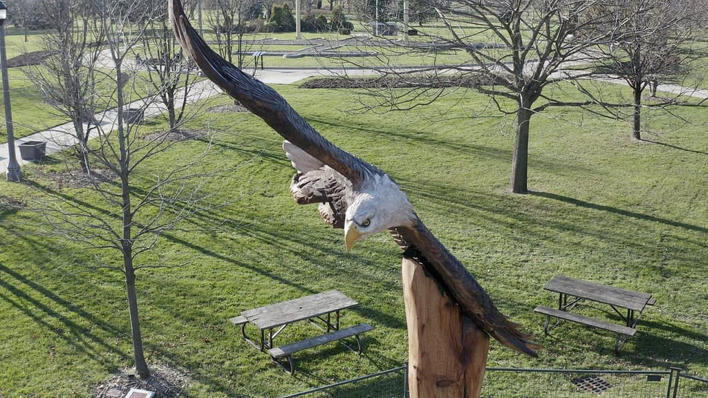 bald eagle Jackson park