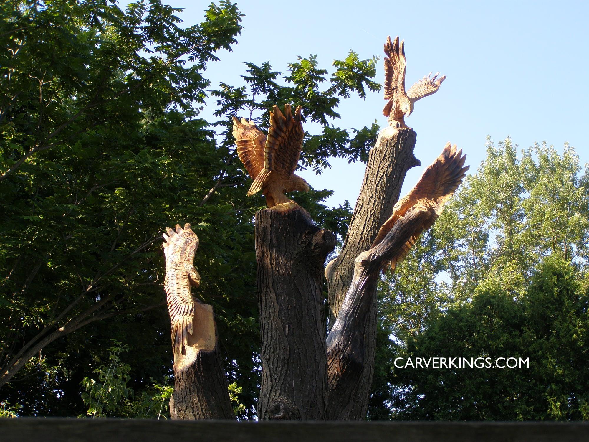 Carving, Soaring, Hawks