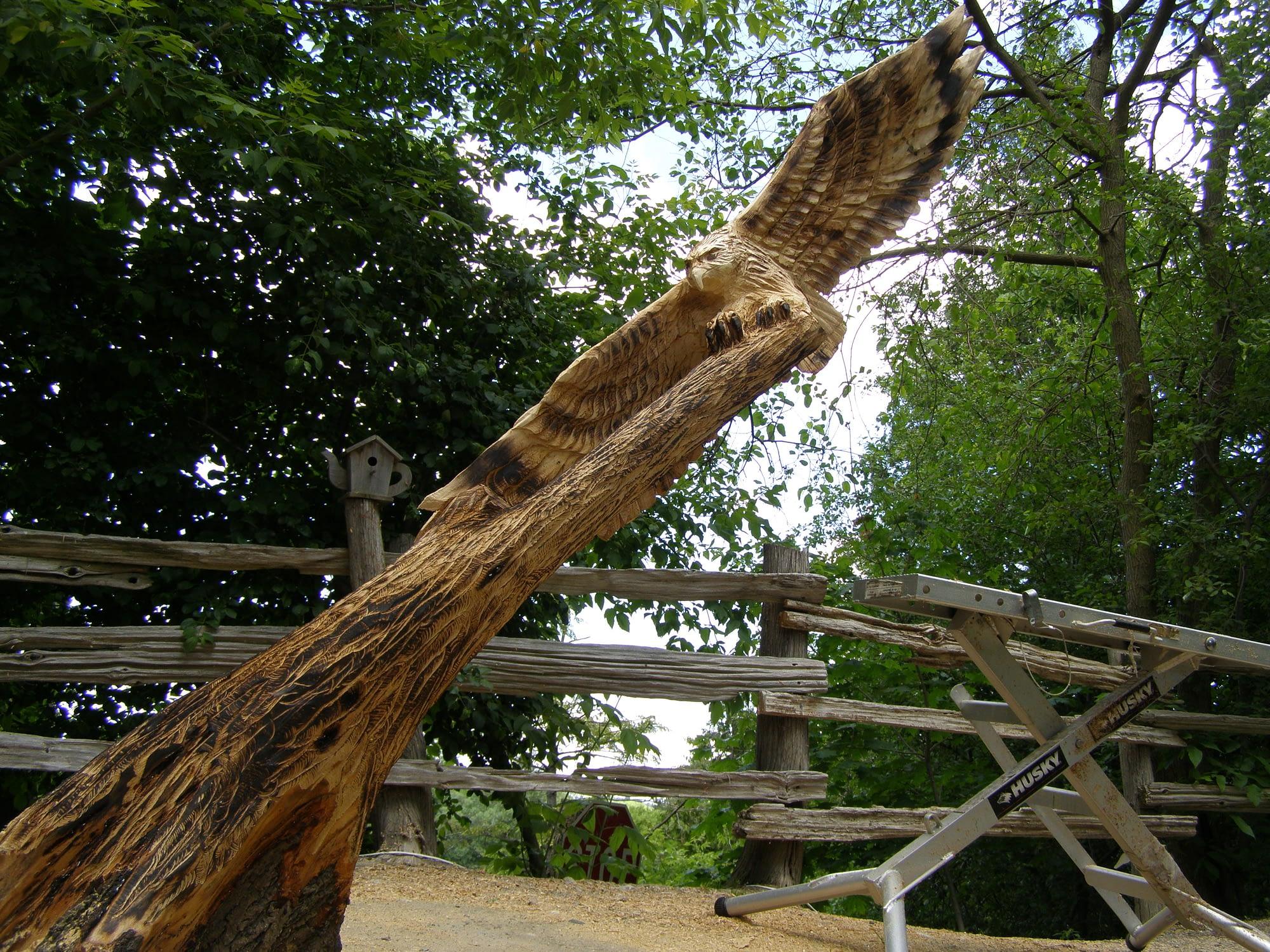 Wood, Hawk, Flying