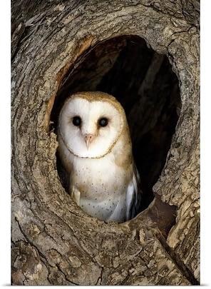 Barn owl carving sculpture